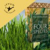 Featured Book! The Four Species:  The Symbolism of the Lulav & Esrog